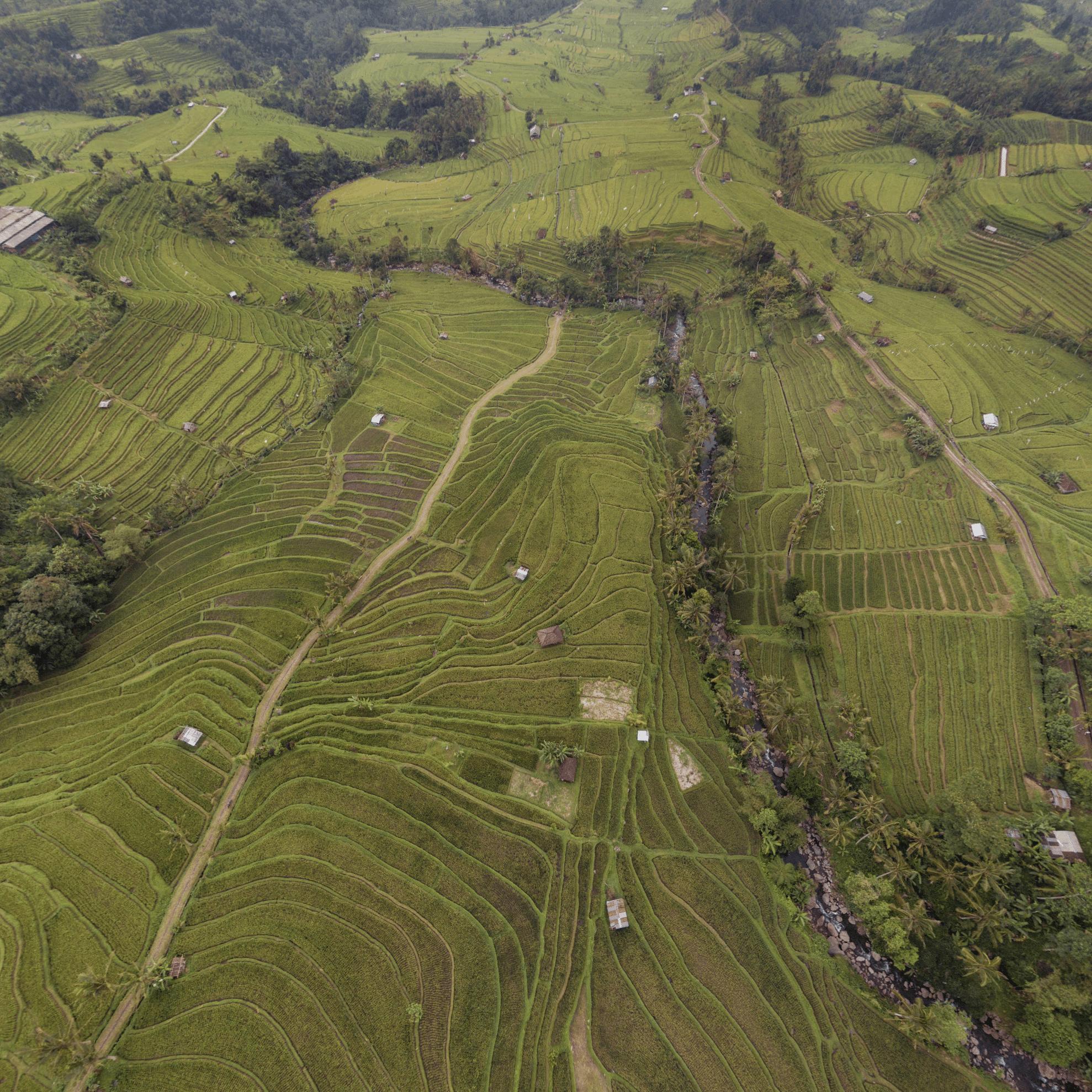 jatiluwih rice terraces bali indonesien patrick roddelkopf patrick roddelkopf fotografie