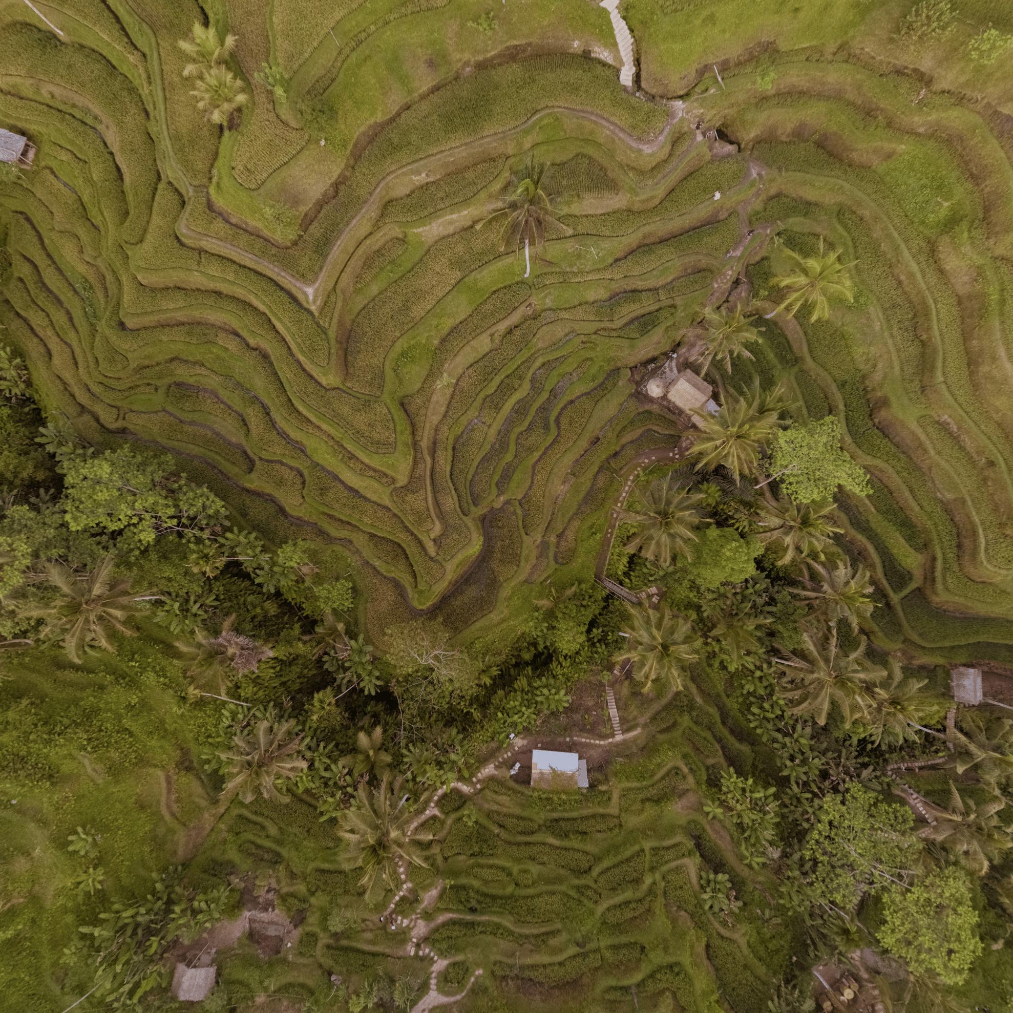 tegallalang rice terrace bali indonesien patrick roddelkopf patrick roddelkopf fotografie